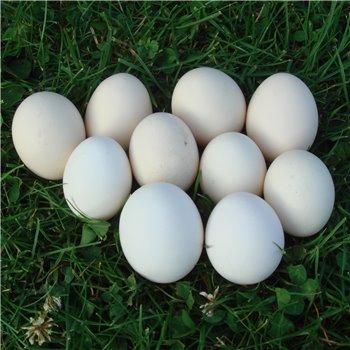 Jaja od liliputki / 10 szt.