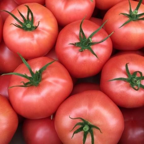 *Pomidor  / kg