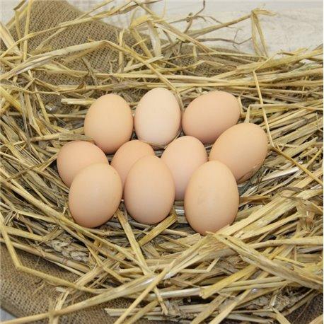 Jaja duże
