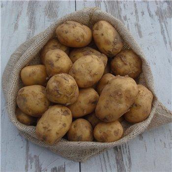 Ziemniak młody / kg
